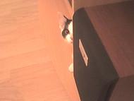 stalker kittie :D (theprayer)